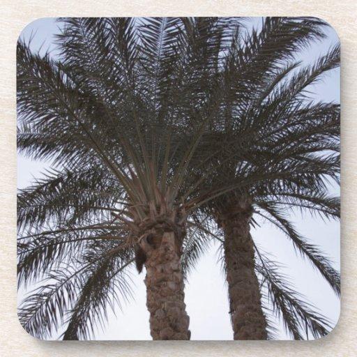 Greenery of palm trees coaster