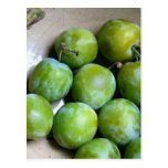 Greengages - Prunus Domestica Post Cards