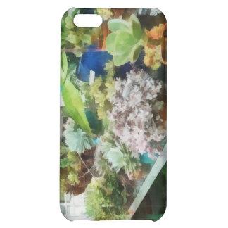 Greenhouse With Cactus iPhone 5C Case