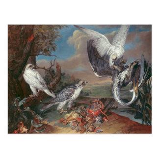 Greenland Cyr Falcons Postcard