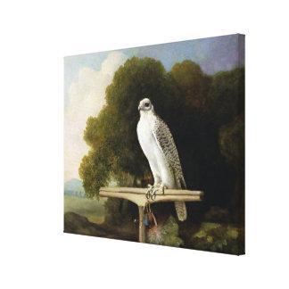 Greenland Falcon (Grey Falcon), 1780 (oil on panel Canvas Print