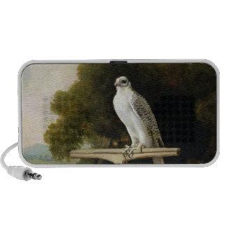 Greenland Falcon (Grey Falcon), 1780 (oil on panel Speakers