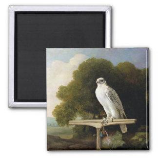 Greenland Falcon (Grey Falcon), 1780 (oil on panel Square Magnet