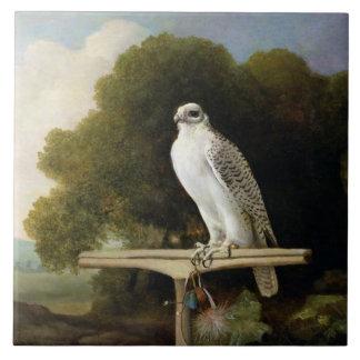 Greenland Falcon (Grey Falcon), 1780 (oil on panel Tile