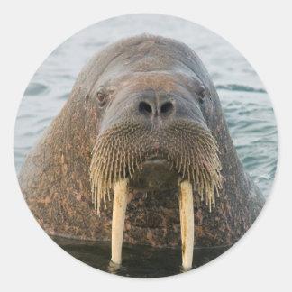 Greenland Sea, Norway, Svalbard Archipelago Classic Round Sticker