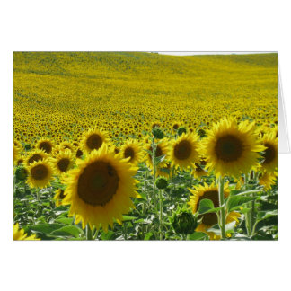 Greeting card : a field of sunflowers