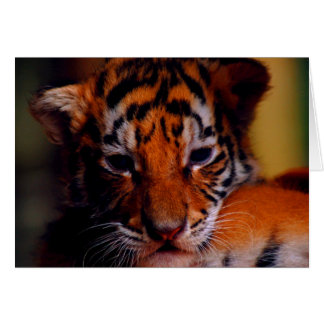 Greeting Card Blank Tiger Cub