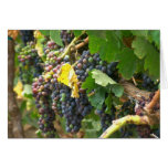 Greeting card, blank, with grapes