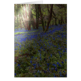Greeting Card Bluebells In The Wood with Sunbeam