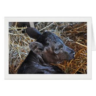 Greeting Card -  Calf in Barn.