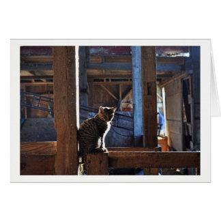 Greeting Card - Cat in Barn.