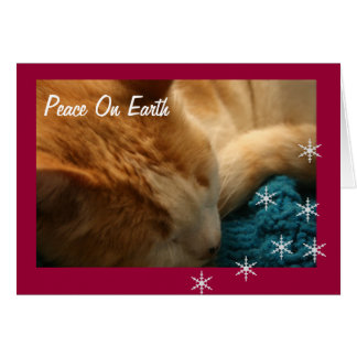 Greeting Card: Christmas Cat Nap Ephesians Card