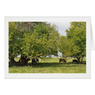Greeting Card - Cows in the Field