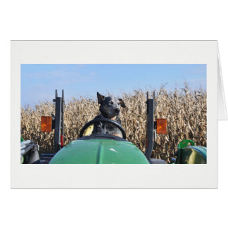 Greeting Card - Dog Driving Tractor