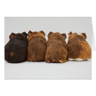 Greeting Card - Guinea Pig Butts