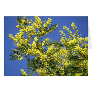 Greeting card : mimosa flowers