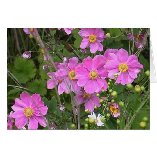 Greeting Card of Fall Anemones