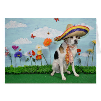 Greeting card, photo of dog in sombrero card