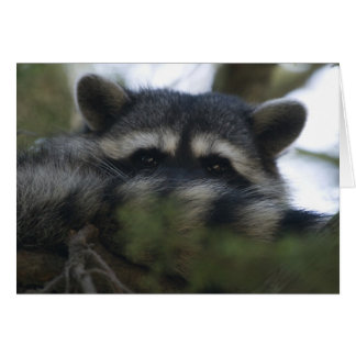 Greeting Card: Racoon Card