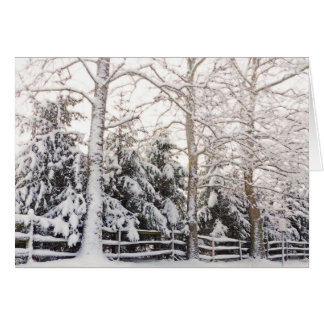 GREETING CARD/SNOW-LADEN EVERGREEN BRANCHES STRETC GREETING CARD