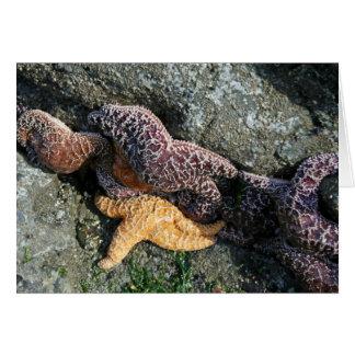 Greeting Card:  Starfish Card