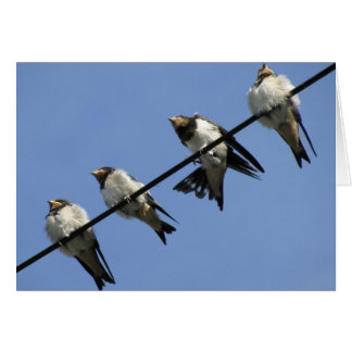 Greeting card swallow chicks on a cable