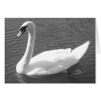Greeting Card - Swan in Black & White