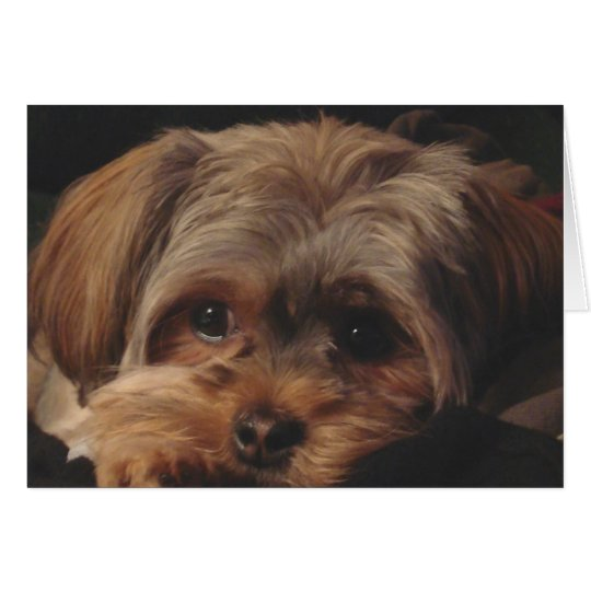 Greeting Card with Shorkie Pup on Front