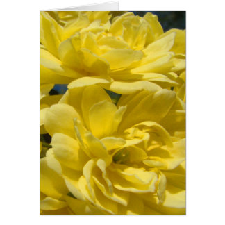 Greeting Card with Yellow Banksia Roses