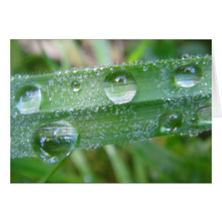Greeting map blade of grass with water drops, in greeting card