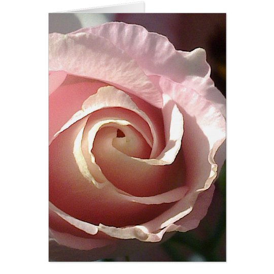 Greeting map pretty pink rose card