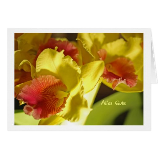 Greeting map yellow orchids card