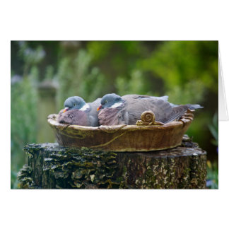 Greetings card with two wood pigeons in a birdbath