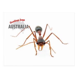 Greetings From Australia - Bull Ant Post Cards