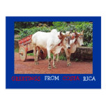 Greetings From Costa Rica Postcard (oxen &oxcart)