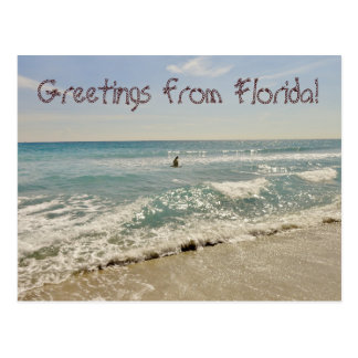 Greetings from Florida Miami Postcard