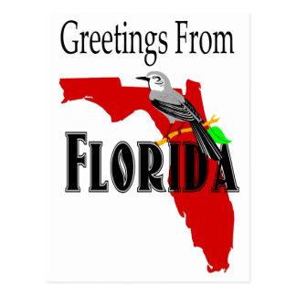 Greetings From Florida Mockingbird State Bird Postcard