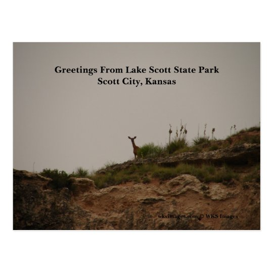 Greetings From Lake Scott State Park Postcard