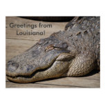 Greetings from Louisiana Post Card