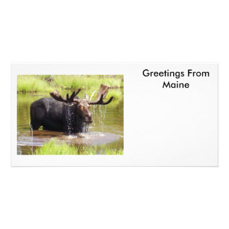 Greetings From Maine Photo Cards