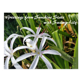 Greetings from Sunshine State Swamp Lily postcard