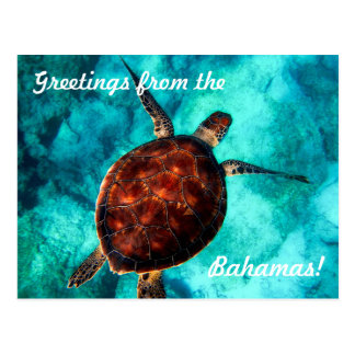 Greetings from the Bahamas Postcard