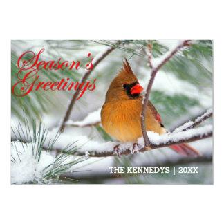 Greetings - Northern Cardinal in snowy pine tree 13 Cm X 18 Cm Invitation Card