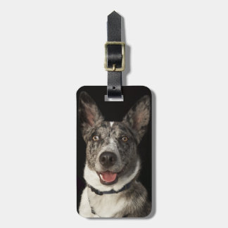 Grey and white Australian Shepherd with harness Luggage Tag