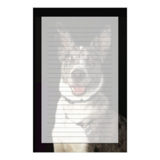 Grey and white Australian Shepherd with harness Stationery