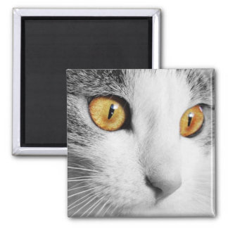 Grey and White Cat Square Magnet