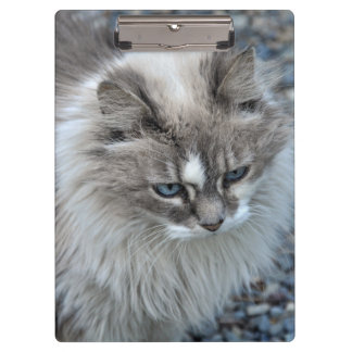 Grey and white fuzzy cat clipboards