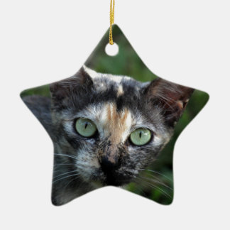 Grey Brown White Cat with Green Eyes Ceramic Star Decoration
