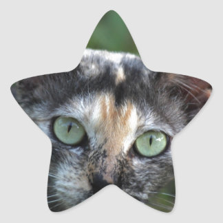 Grey Brown White Cat with Green Eyes Star Sticker