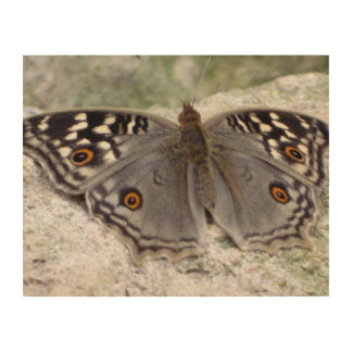 Grey Butterfly Colour Image - Wood Canvas